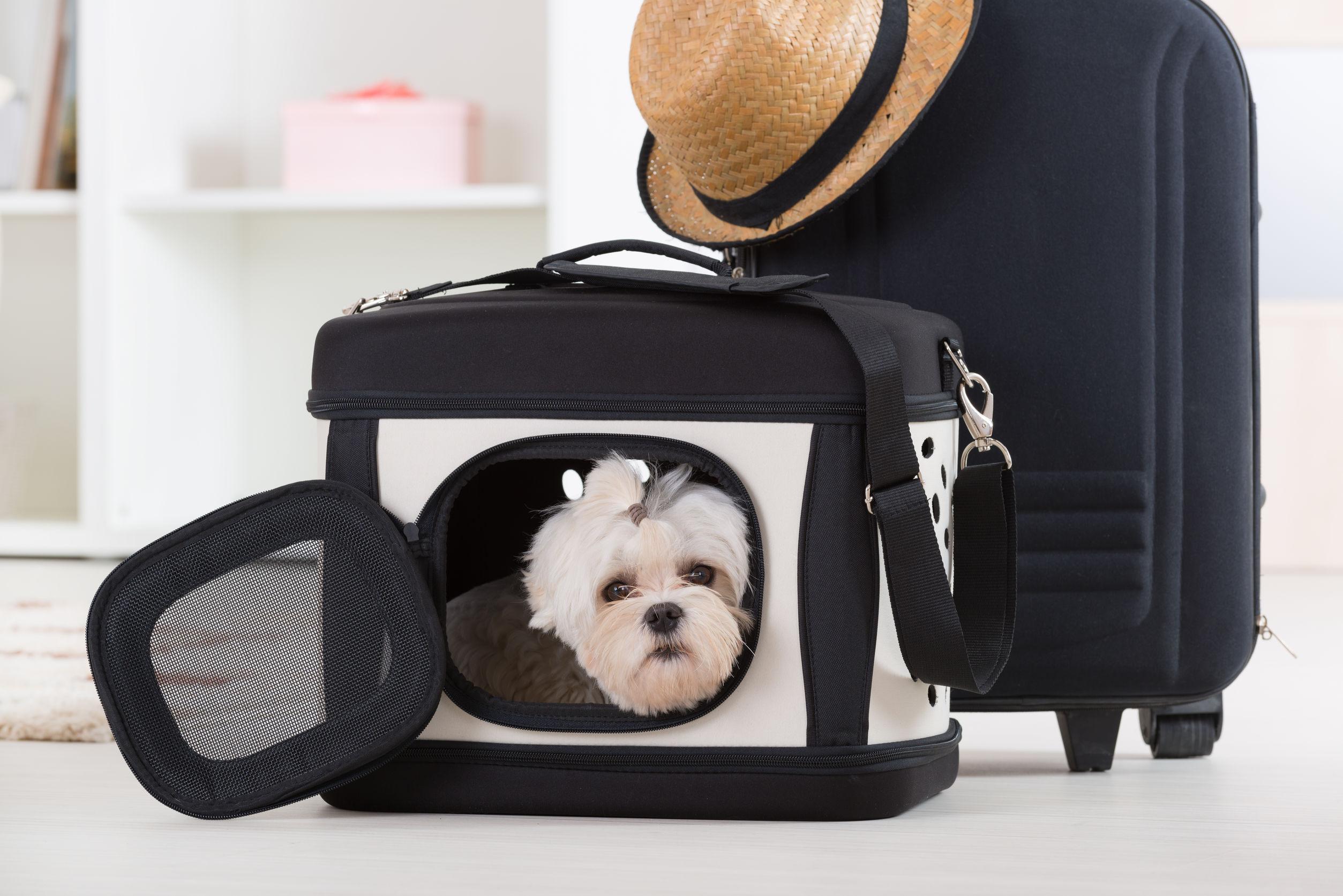 Guía para adquirir mejores bolsas para perritos